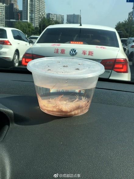 要优雅不要污:天气到底有多热?堵车的时候虾子熟了……